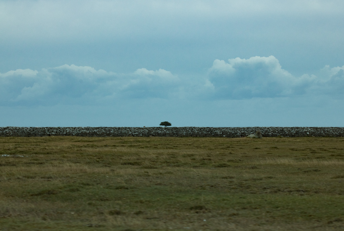 The Lonely Child —This is what a wall does. Öland, Sweden.